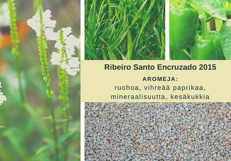 Aromikortti, valkoviini Ribeiro Santo Encruzado 2015, Viinihetki.fi