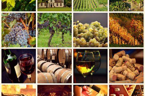 viini_kollaasi, viinihetki