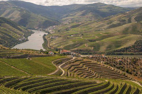 Douro, Mikä Portugalin viineissä kiehtoo, Viinihetki